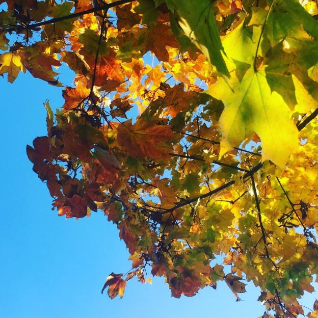 Herbsthimmel…